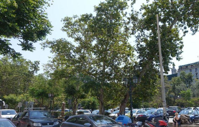 2 κομμένα δένδρα